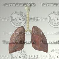 lung 3d model