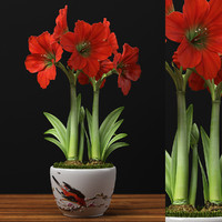 red amaryllis 3d model