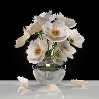 flower white poppies