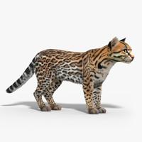 3d model ocelot cat fur