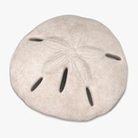 3d sea shell sand dollar