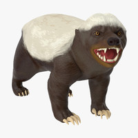 3d honey badger
