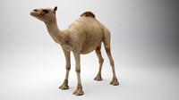 3d camel egypt