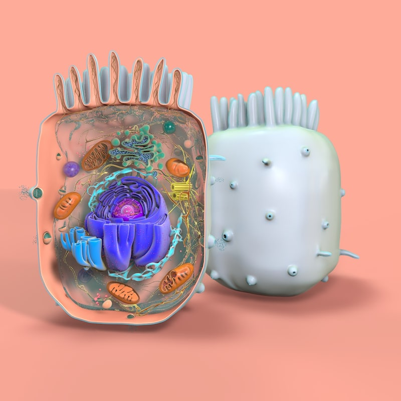 Animal_Cell_Color.jpg