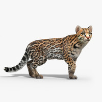 Ocelot cat(FUR)(RIGGED)