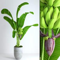 pot banana tree moss 3d max