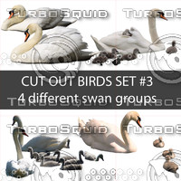 Cut out bird photo set#3: 4 swan groups in PSD