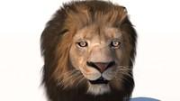 Lion fur rigged
