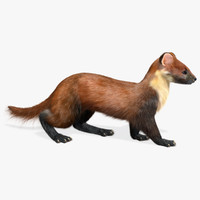 3d rigged marten fur animation