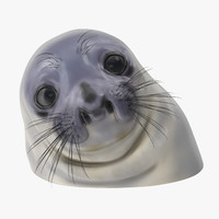 3d awkward moment seal model