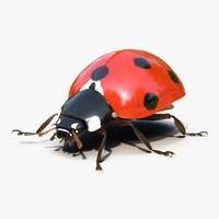 3d ladybug rigged fur
