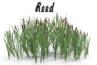 reeds 3d fbx