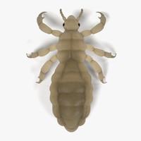 3d model male louse