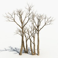 scary tree dry 3d x