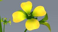 mustard plant 3d model