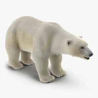 3d polar bear fur model