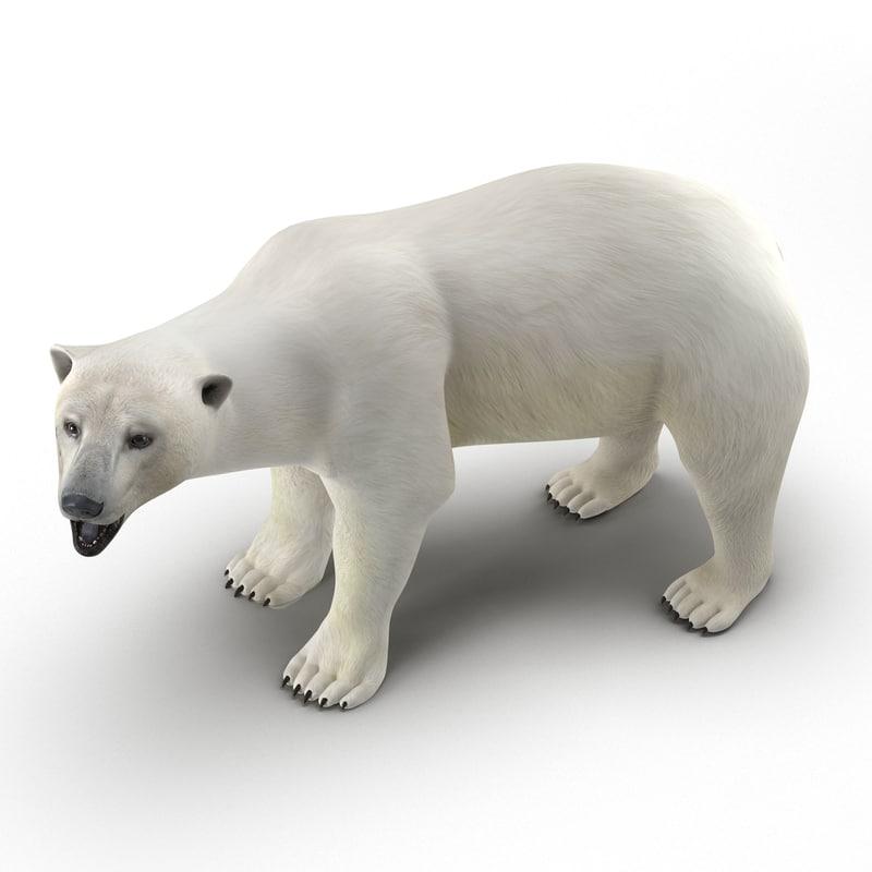 Polar Bear Rigged 3d model 01.jpg