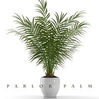 3d parlor palm plant