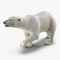 3d model polar bear pose 2
