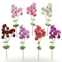 interior flower plant 3d model