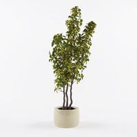 houseplant plant max