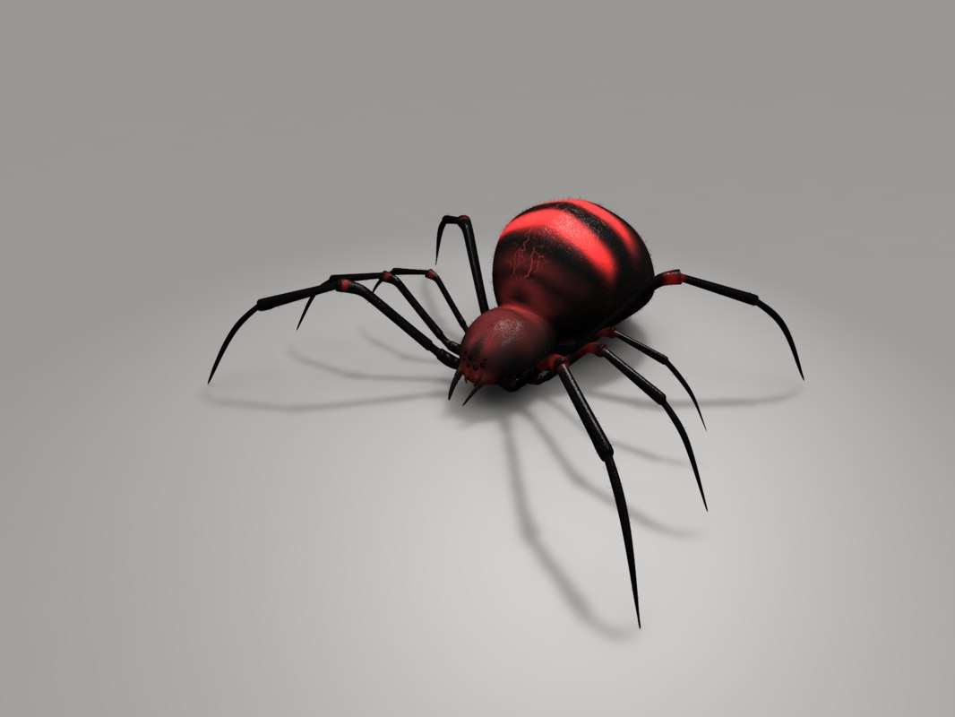 Spider11_0006.png