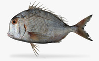 pacific porgy x