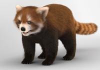 red panda lesser 3d model