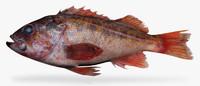 vermillion rockfish 3d fbx
