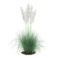 max ornamental grass
