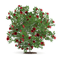 red rose shrub 3d model
