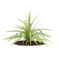 yellow yucca plant arkansana 3d model