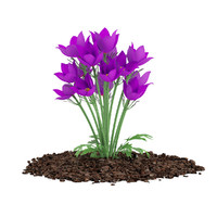 3d pasque flowers pulsatilla vulgaris