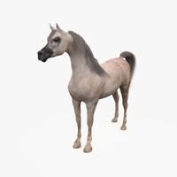 horse arabian grey 3d model