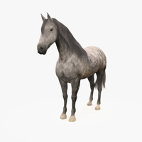 3d model horse andalusian grey