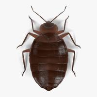 bedbug male 3d 3ds