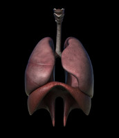 obj respiratory