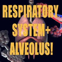 pack respiration alveolus 3d obj