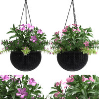 hanging basket flowered plants max
