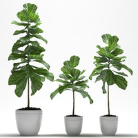 3d x fig plant