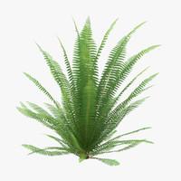 3d ferns 02 model
