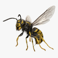 vespula vulgaris common wasp 3d obj
