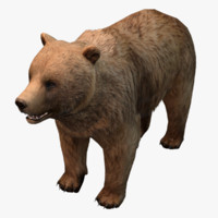bear real-time asset 3d max