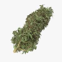 marijuana bud 01 3d model