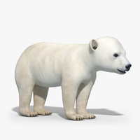polar bear baby 3d model