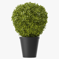 shrubs pots 3d max