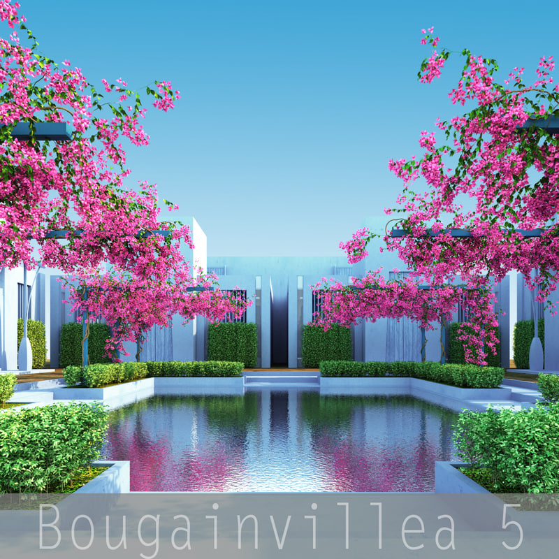 Bougainvillea5_00.jpg