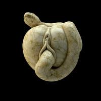 3d model paradise apple