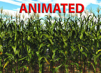 corn animated