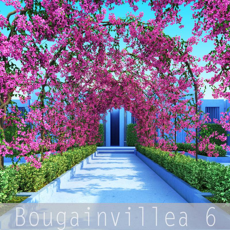 Bougainvillea6_00.jpg